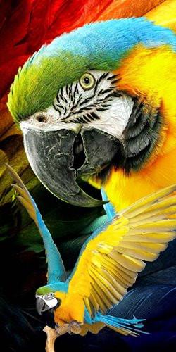 Strandtuch Parrot