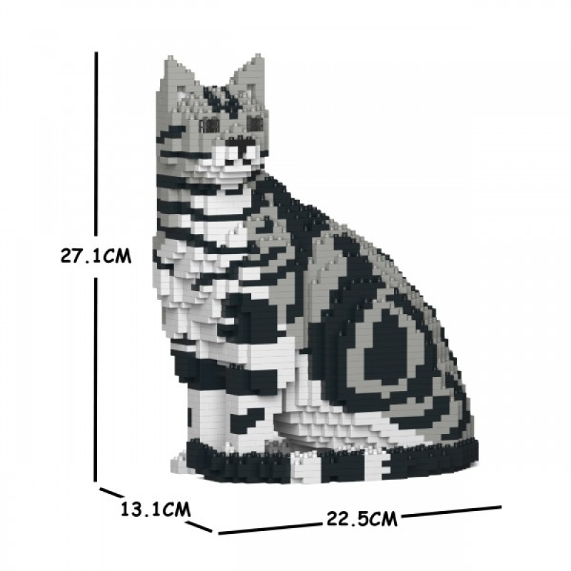 Jekca - American Shorthair Cat